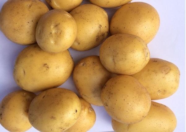 Сорт картофеля наташа характеристика сорта