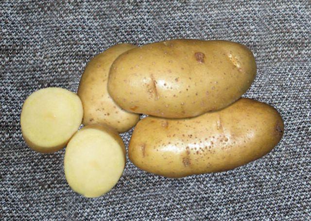 только картофель журавинка описание сорта фото тюбинги