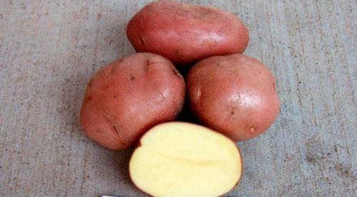 Сорт картофеля алуэт характеристика