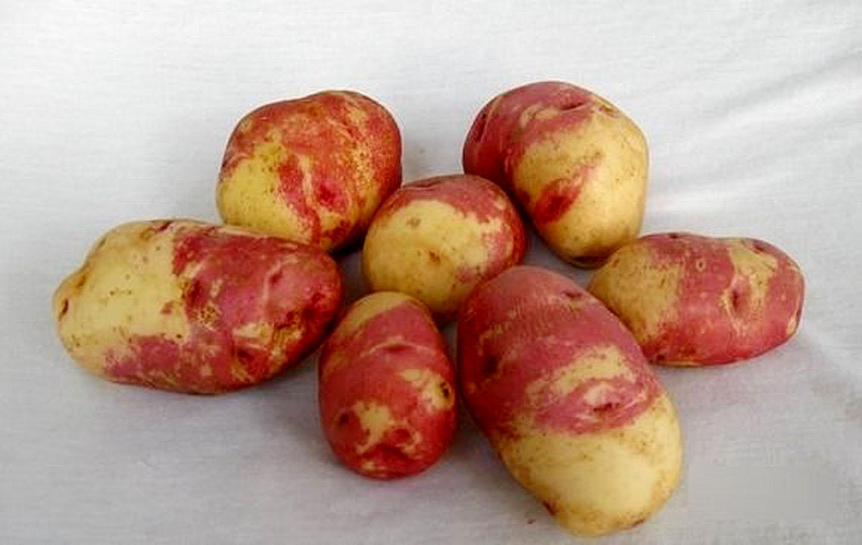 Как выглядит картошка иван да марья