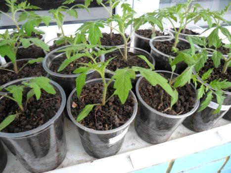 дни посадки томатов в марте 2020