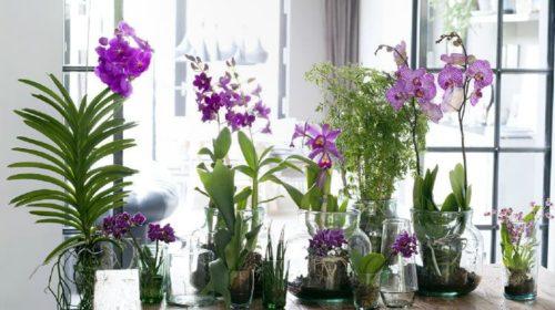 osveschenie orhidej
