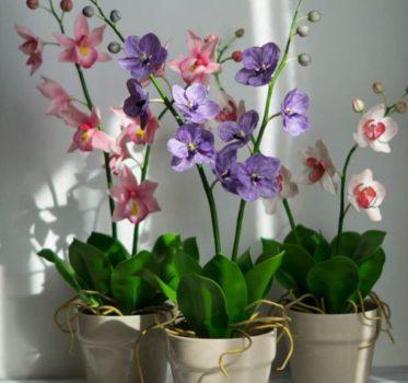 orhideja vanda osveschenie