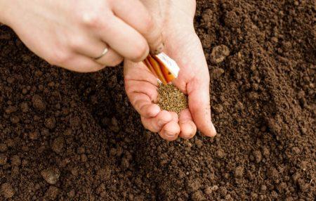 Когда сажать морковь в 2020 году по лунному календарю: расчет благоприятных дней для посева, влияние региона и особенности выращивания