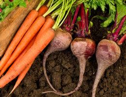 Когда сажать морковь и свеклу весной в 2020 году по лунному календарю: благоприятные дни, выбор соседства, важные условия выращивания