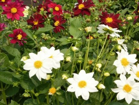 веселые ребята цветы размножение