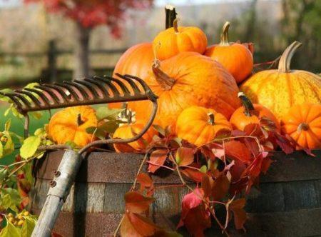 Лунный календарь посадок на ноябрь