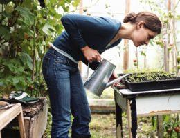 женщина поливает рассаду