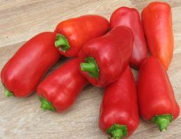 Самые урожайные и вкусные сорта острого и сладкого перца